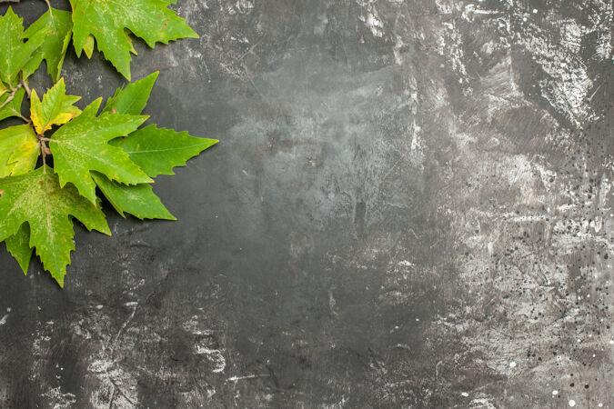 顶视图灰色表面上的绿叶
